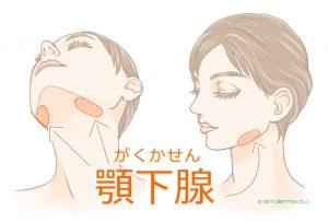 顎下腺の場所イラスト