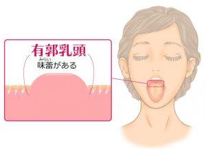 舌の働きとしくみ